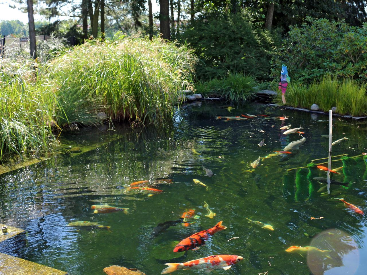Der Koiteich, die wohl anspruchsvollste Art und Weise einen Teich zu betreiben. Wir als Profis wissen worauf es ankommt.