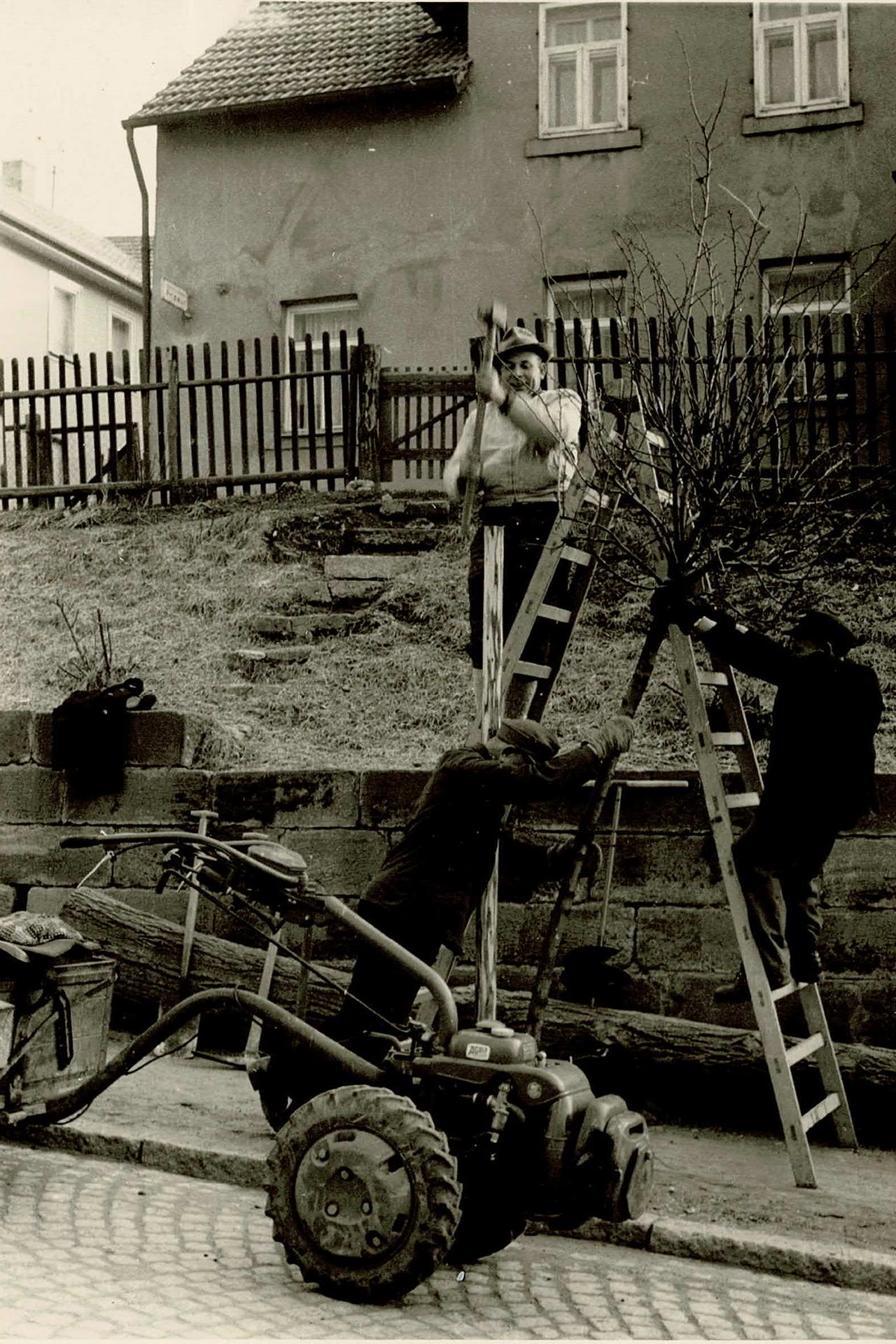 1963: Norbert Rauch gemeinsam mit seinen drei Aushilfkräften bei der Neupflanzung von Hochstämmen an der Langheimer Straße in Lichtenfels.